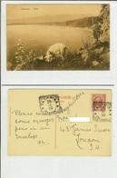 Taormina (Messina): Etna. Cart. Fp Vg 1910 (cane In Primo Piano) - Messina