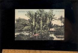 RIO DE JANEIRO Brasil : Les Bananiers Du Jardin Botanique  Banane Trees Of Botanical Garden - Rio De Janeiro