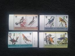 Montserrat Birds Mint - Montserrat
