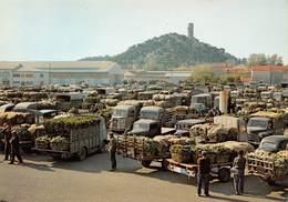 CHATEAURENARD - Le Marché Aux Primeurs - Fourgons Citroën - Camions - Chateaurenard