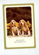 Carte Chien Cachet Saint Louis Sur Sabine + Chorale Hegenheim - Dogs