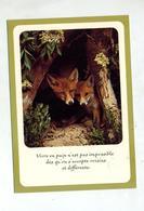 Carte Renard Cachet Saint Louis Sur Sabine + - Animals