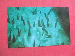 Catfish Hotel  Florida Silver Springs   >> Ref 3378 - Fish & Shellfish