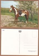 AC - HORSE TURKEY CARTE POSTALE POST CARD - Horses