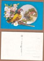 AC - BIRD CARTE POSTALE POST CARD - Birds