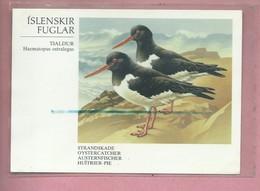 CPM - ISLENSKIR - FUGLAR - TJALDUR - Haematopus Ostralegus - Strandskade Oystercatcher Austernfischer Huitrier Pie - IJsland