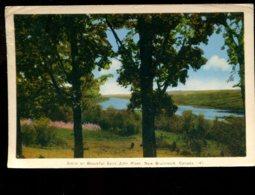 Scene On Beautiful Saint John River - St. John