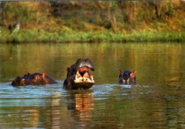CPM - Hippopotames - Niger