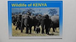CPA ::Afrique > Kenya :Wildlife Of Kenya :Elephant Herd - Kenya