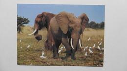 CPA ::Afrique > Kenya :Wildlife :Elephants - Kenya
