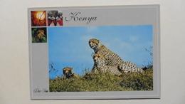 CPA ::Afrique > Kenya :Wildlife :Of Kenya   :Cheetah Family - Kenya
