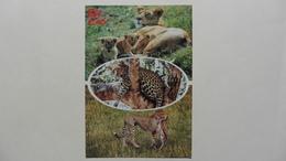 CPA ::Afrique > Kenya : Léopard (centre ) Cheetah (bottom) - Kenya