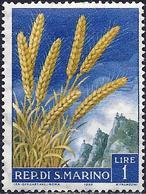 San Marino 1958 - Mi 594 - YT 449 ( Ears Of Wheat ) - Saint-Marin