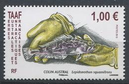 TAAF 2013 - N° 641 - Poisson - Colin Austral - Neuf -** - Französische Süd- Und Antarktisgebiete (TAAF)