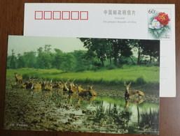 Yancheng Wildlife Pere David'deer,China 2000 Dafeng National Elk Nature Reserve Wetland Advertising Pre-stamped Card - Francobolli