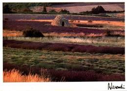 CPM - Photo ALESSANDRI - Provence - Edition Images & Lumières / N°560 - Ilustradores & Fotógrafos