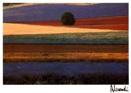 CPM - Photo ALESSANDRI - Provence - Edition Images & Lumières / N°280 - Ilustradores & Fotógrafos