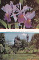 CPM ASIE CEYLON Orchids Cattleya And View Of Lake Drive Peradeniya Gardens Fleurs Jolis Timbres - Sri Lanka (Ceylon)