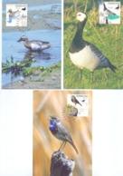 Nederland - Maximumkaarten - Michel Blok 41  - Den Haag 1994    (RM14648) - Oiseaux