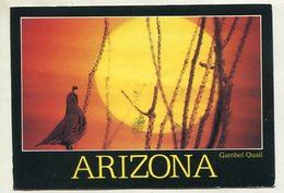 USA - AK 350209 Arizona - Etats-Unis