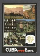 CUBA - CUBA TE ESPERA - LA LEYENDA DEL PURO - LA LÉGENDE DU HAVANA - THE LEGEND OF THE CIGAR  EDITIONS PUMAS MONTPEYROUX - Cuba