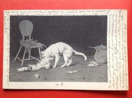 1900 - Illustrateur F. SPINASSE - CHAT ET SOURIS - KAT EN MUIS - Illustrateurs & Photographes