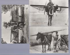 3 X PK/CP PÊCHEUR VISSCHER VISSER PAARD CHEVAL HORSE - Autres