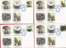 Armenien / Armenie / Armenia / Artsakh / Karabakh 2019, Mushrooms, Flora - Card Maximum - Funghi