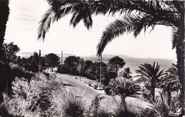 LE RAYOL - La Descente à La Plage. A L'horizon , Les Iles D'Or - Rayol-Canadel-sur-Mer