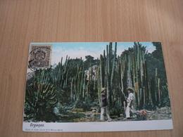 PC17/ MEXIQUE ORGANOS  / CARTE VOYAGEE - Messico