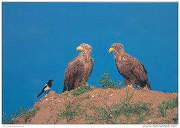 Tiere / Animals: Seeadler (D-A176) - Vögel