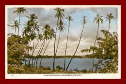 Ceylon * Lagoon Scene * Negombo      ( Scan Recto Et Verso ) - Sri Lanka (Ceylon)