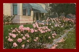 Los Angeles * Rose Hedge    ( Scan Recto Et Verso ) - Los Angeles