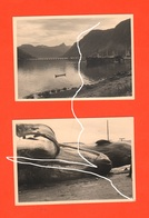Tromsø Narvick Norvegia Norge Balene Capodogli 1954 Whales Sperm Whales Cachalots Baleines Cachalots Pesca - Luoghi