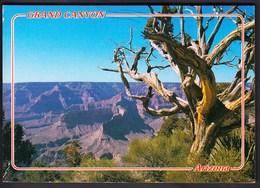 USA United States Flagstaff 1990 / Grand Canyon, Arizona - Grand Canyon
