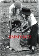CPM - Récolte Des Pommes De Terre - Fête Des Moissons Travaux Agricoles SAINT JANS CAPPEL 59 Nord - Photo Francis LEROUX - Landbouw