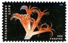 Etats-Unis / United States (Scott No.5273 - Bioluminescent Life) (o) TB / VF - Used Stamps