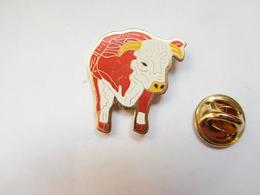 Beau Pin's , Vache , Bœuf , Bovin - Animals