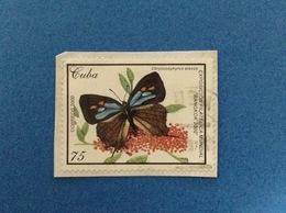 2000 CUBA FARFALLA 75 FRANCOBOLLO USATO STAMP USED - Used Stamps