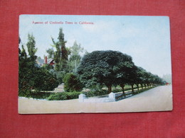 Avenue Of Umbrella Trees In California         Ref 3382 - Trees