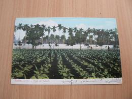 CP20/ CUBA JARDIN Y VEGA DE TABACO  / CARTE VOYAGEE - Cartoline