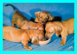A770 / 041   Chiens Et Chats Nos Amis - Hunde