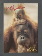 ANIMAUX - ANIMALS - METRO TORONTO ZOO - SUMATRAN ORANGUTANS - 17 X 12 Cm - 6¾ X 4¾ Po - PHOTO D.HANEDA - Singes