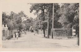 44 - SAINT BREVIN L' OCEAN - Avenue Des Chalets Prise De La Brévinière - Saint-Brevin-l'Océan