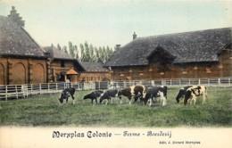 Belgique - Merksplas - Merxplas  Colonie ) -Ferme - Boerderij - Couleurs - Merksplas