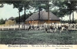 Belgique - Merksplas - Merxplas  Colonie - Un Coin De La Ferme - Een Hoek Der Boerderij - Douleurs - Merksplas