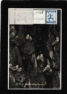 Lundy,UK-Kittiwakes 1951- Antique Postcard - United Kingdom