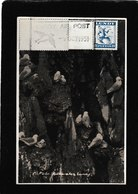 Lundy,UK-Kittiwakes 1951- Antique Postcard - Altri