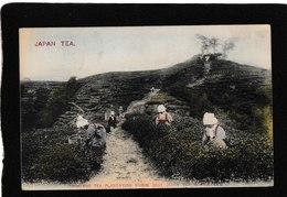 "Japan-Highland Tea Plantation ""Where The Best Japan Tea Is Produced"" 1916 - Antique Postcard - Japan"