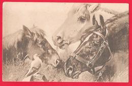 CAVALLO - CHEVAL - CHEVAUX - HORSES - PFERD - Chevaux